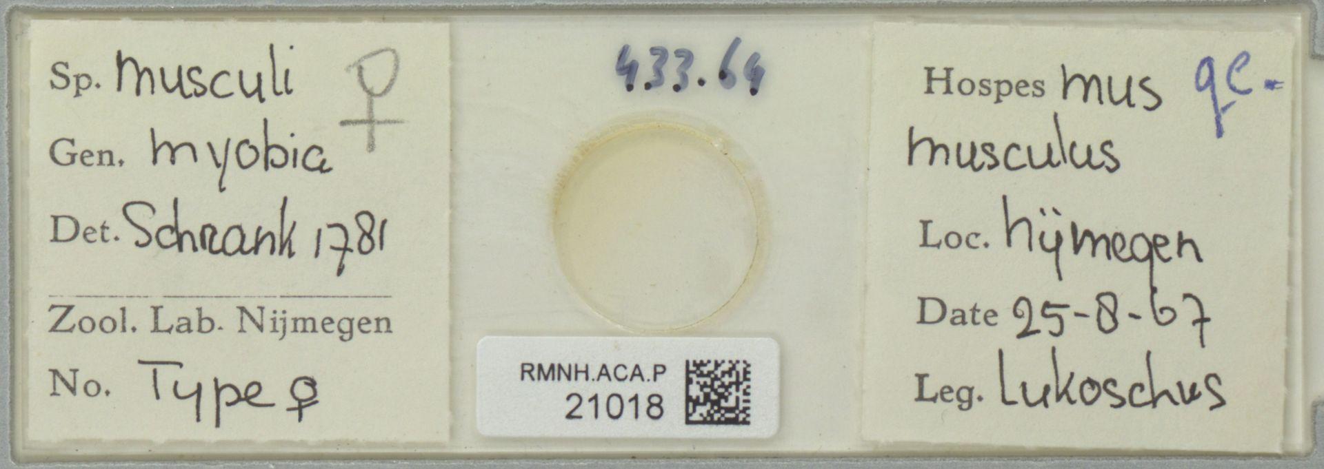RMNH.ACA.P.21018 | Myobia musculi