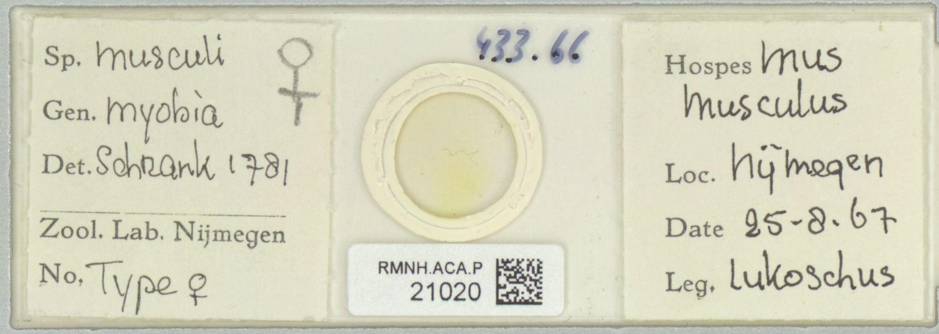RMNH.ACA.P.21020 | Myobia musculi