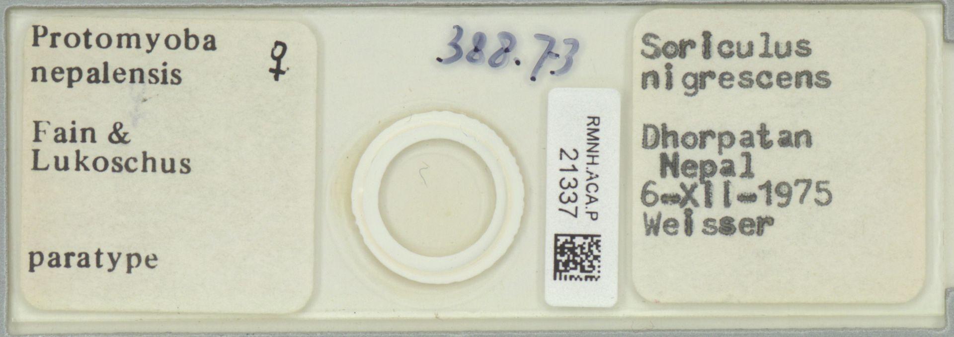 RMNH.ACA.P.21337 | Protomyobia nepalensis