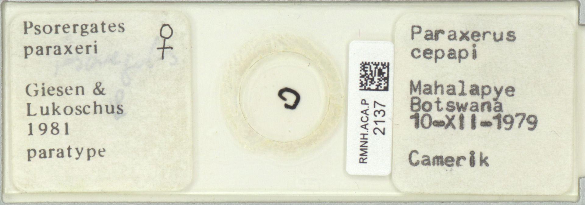 RMNH.ACA.P.2137 | Psorergates paraxeri Giessen & Lukoschus, 1981