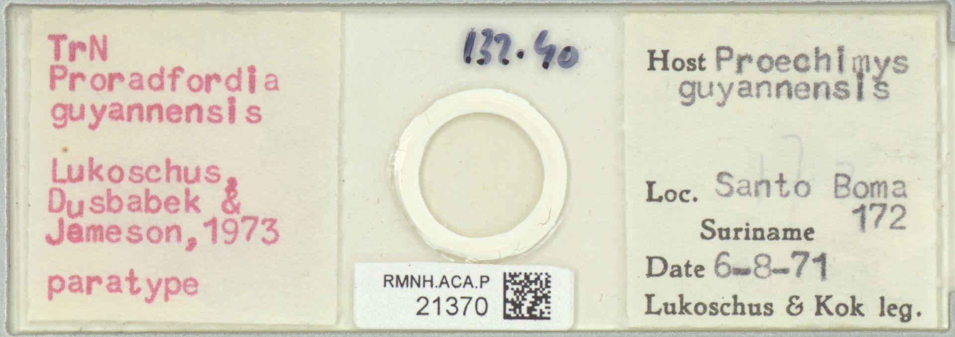 RMNH.ACA.P.21370   Proradfordia guyannensis