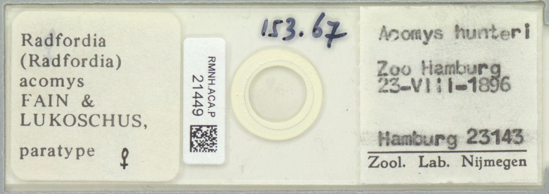 RMNH.ACA.P.21449 | Radfordia (Radfordia) acomys Fain & Lukoschus