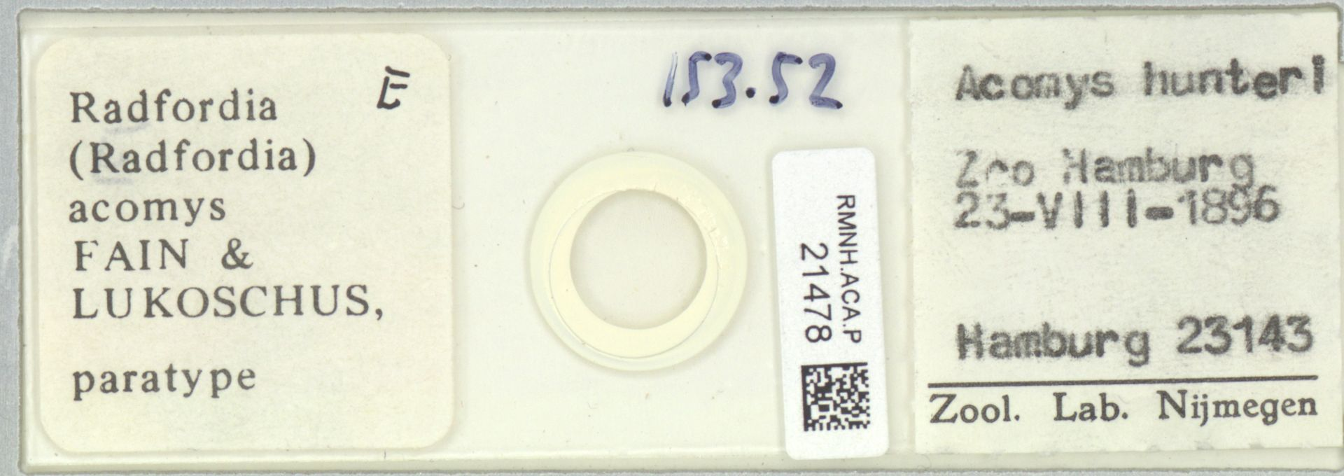 RMNH.ACA.P.21478 | Radfordia (Radfordia) acomys FAIN & LUKOSCHUS