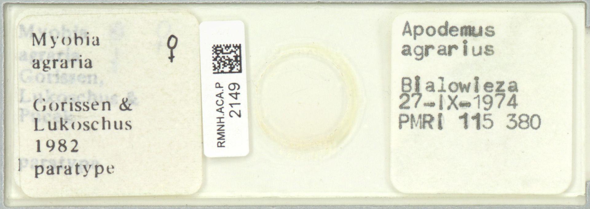 RMNH.ACA.P.2149   Myobia agraria Gorissen & Lukoschus, 1983