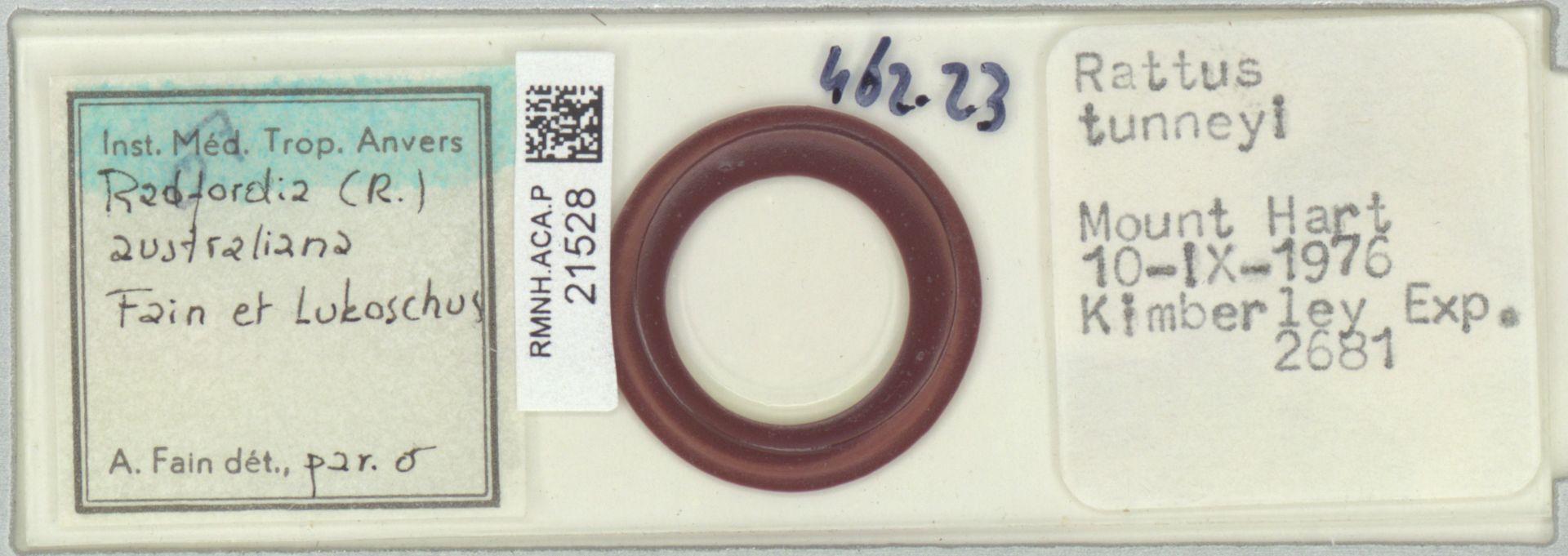 RMNH.ACA.P.21528 | Radfordia Fain et Lukoschus