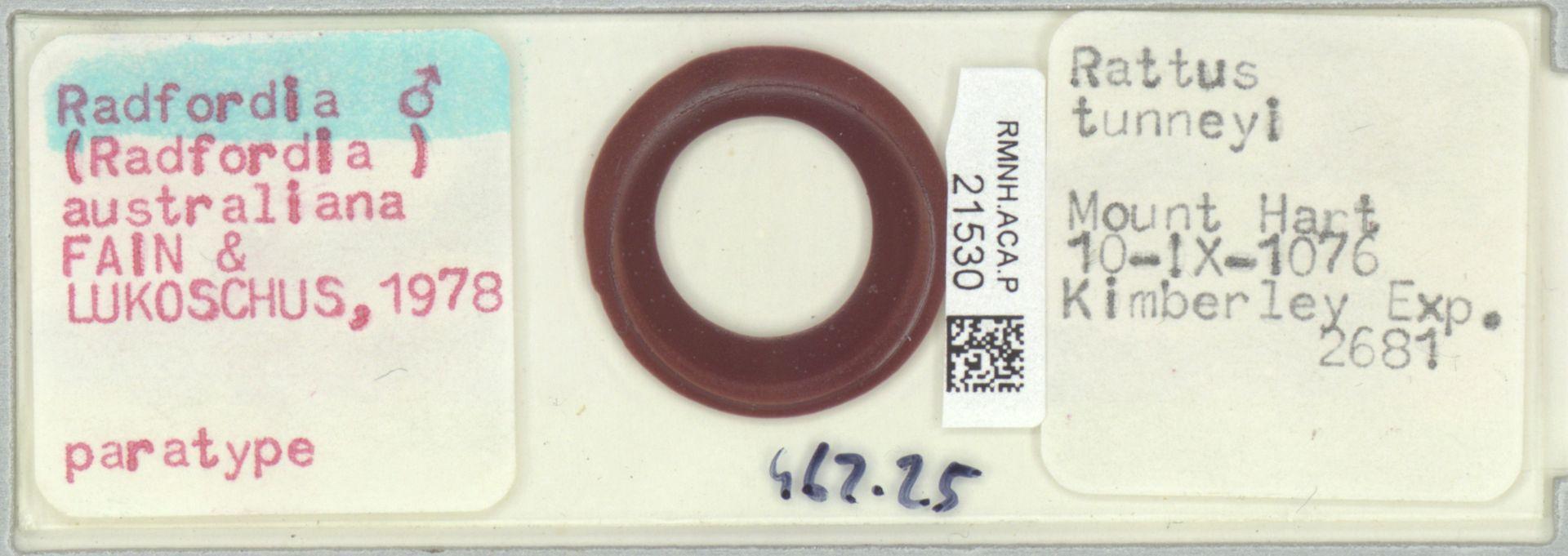 RMNH.ACA.P.21530   Radfordia (Radfordia) australiana Fain & Lukoschus, 1978