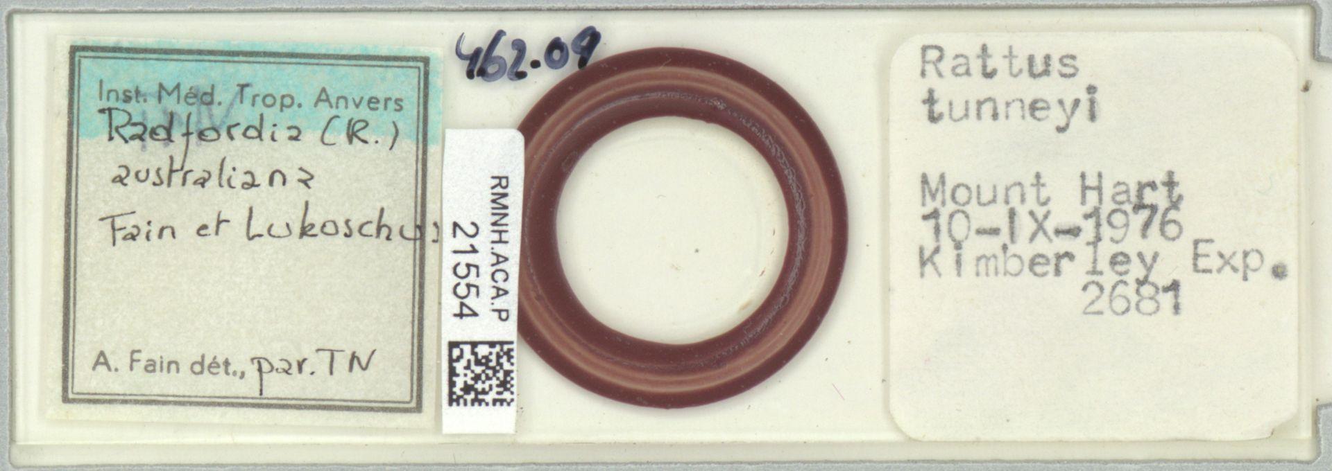 RMNH.ACA.P.21554 | Radfordia Fain et Lukoschus