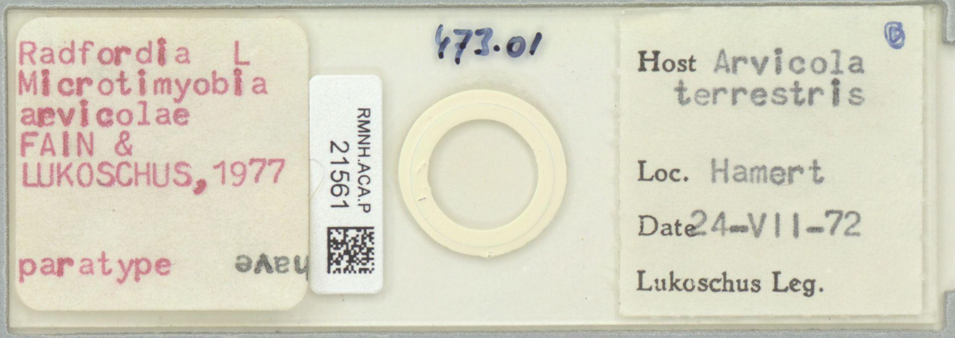 RMNH.ACA.P.21561 | Radfordia (Microtimyobia) arvicolae Fain & Lukoschus, 1977