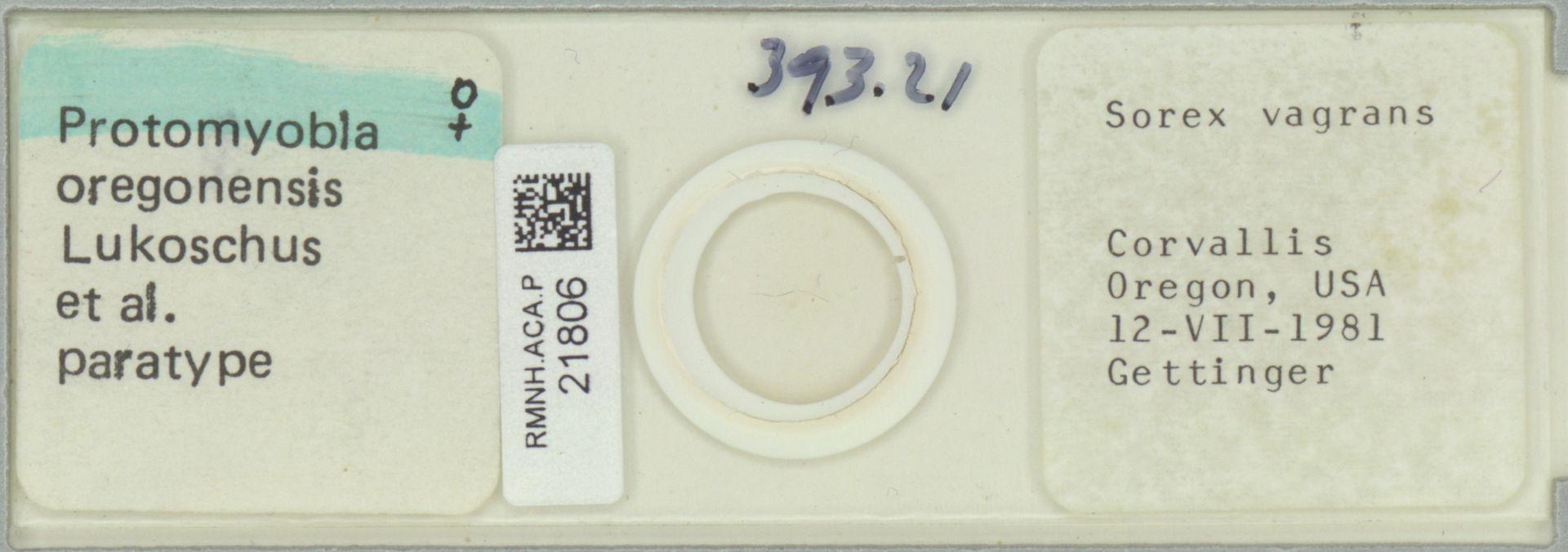 RMNH.ACA.P.21806 | Protomyobia oregonensis Lukoschus et al.