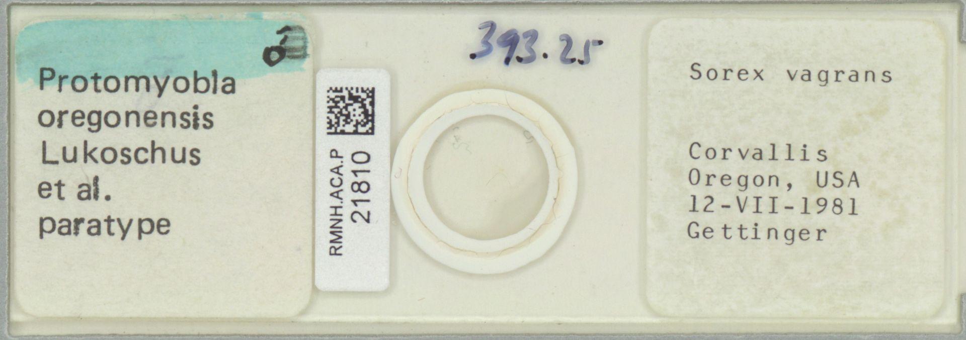 RMNH.ACA.P.21810 | Protomyobia oregonensis Lukoschus et al.