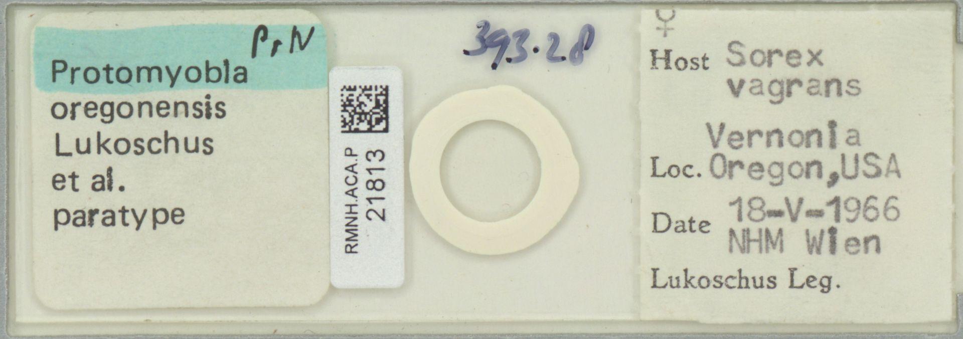 RMNH.ACA.P.21813 | Protomyobia oregonensis Lukoschus et al.