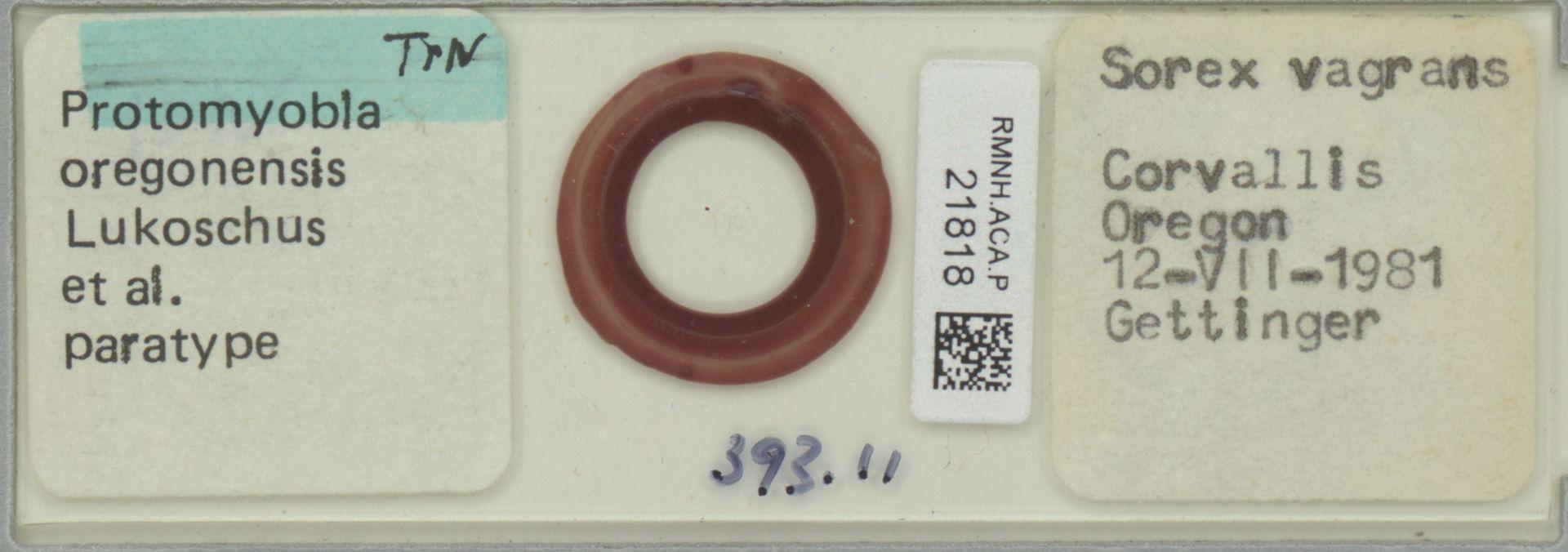 RMNH.ACA.P.21818 | Protomyobia oregonensis Lukoschus et al.