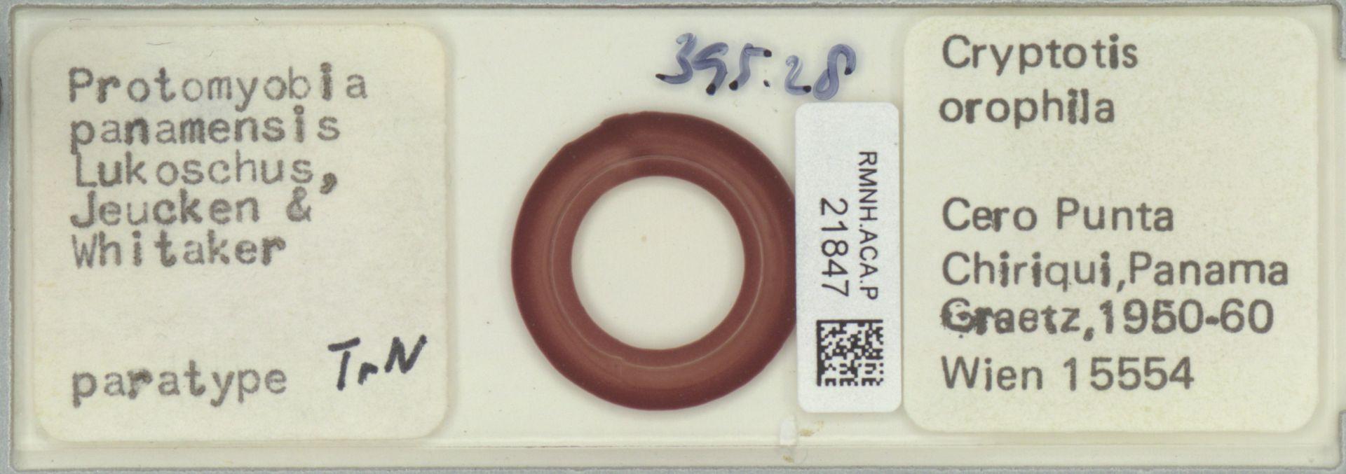 RMNH.ACA.P.21847 | Protomyobia panamensis Lukoschus, Jeucken & Whitaker