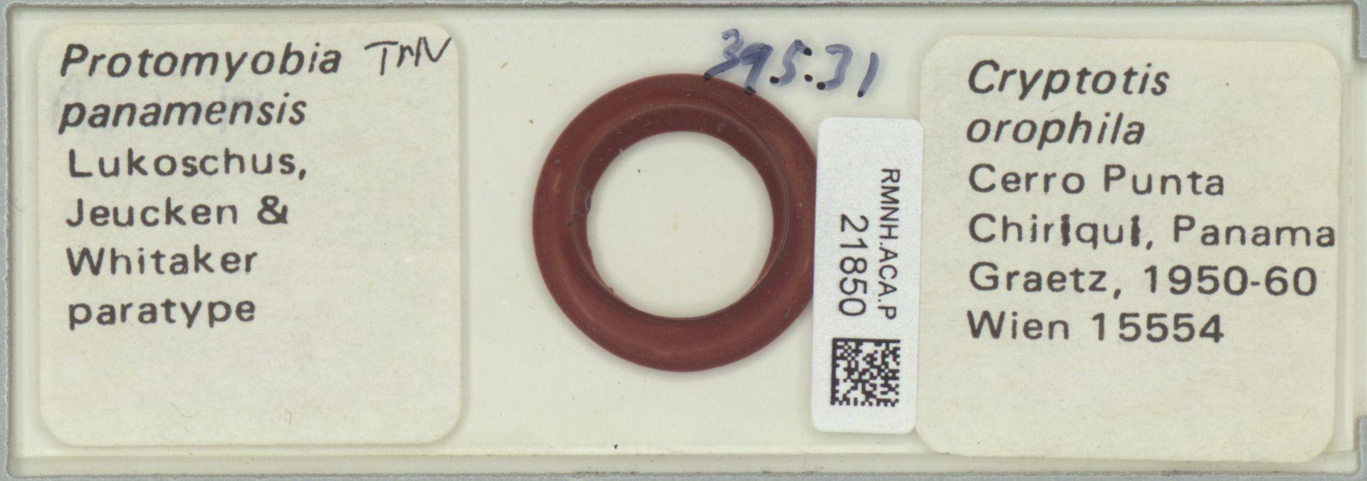 RMNH.ACA.P.21850 | Protomyobia panamensis Lukoschus, Jeucken & Whitaker