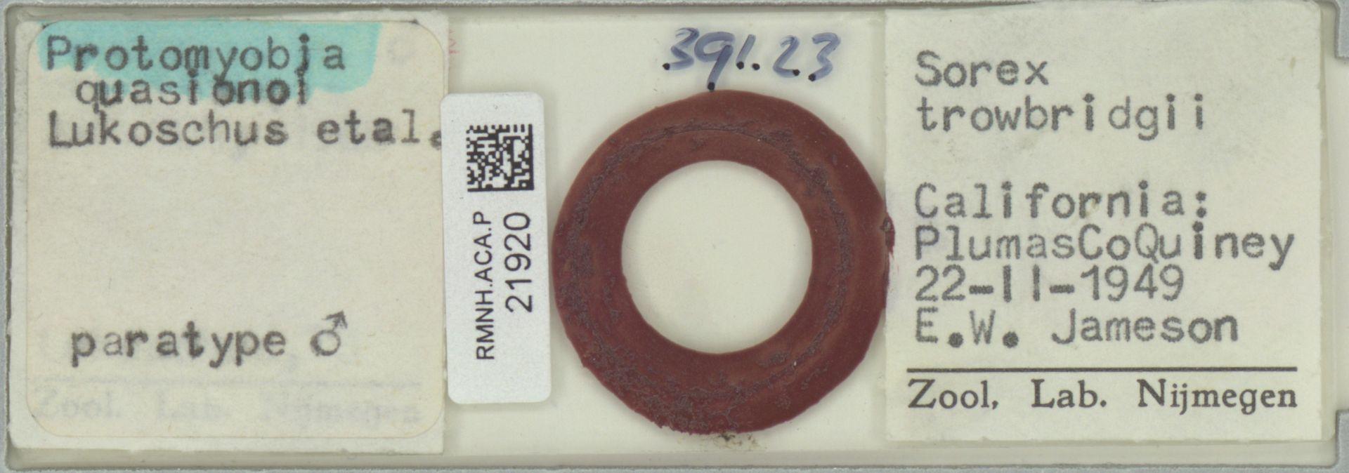 RMNH.ACA.P.21920 | Protomyobia quasionoi Lukoschus etal.