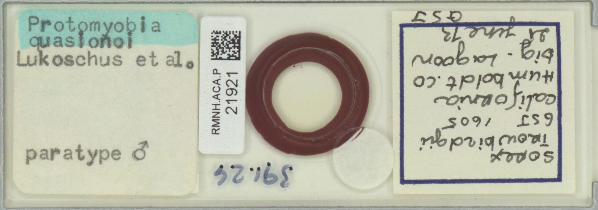 RMNH.ACA.P.21921 | Protomyobia quasionoi Lukoschus et al
