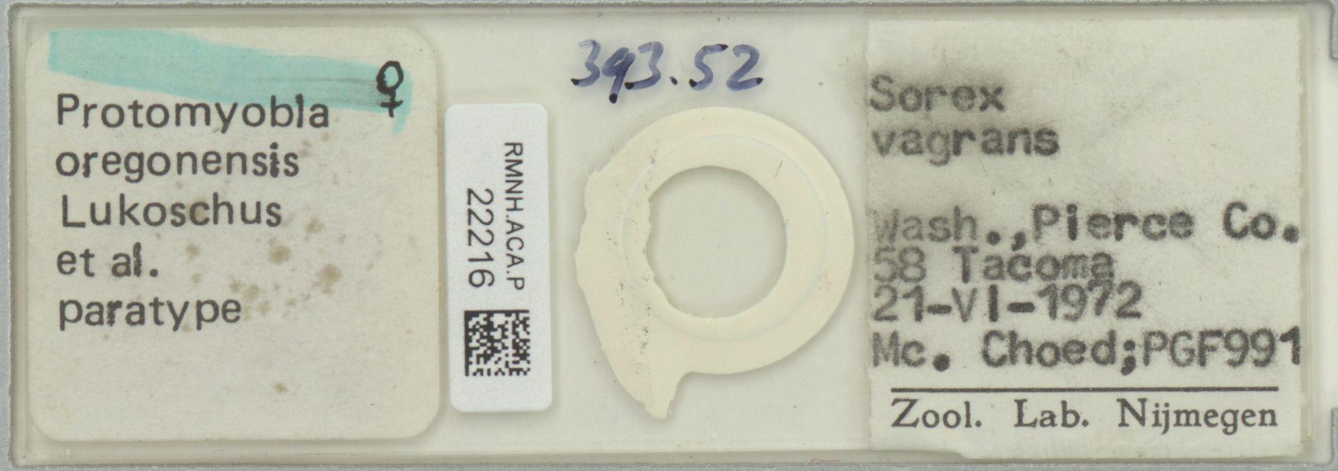 RMNH.ACA.P.22216 | Protomyobia oregonensis