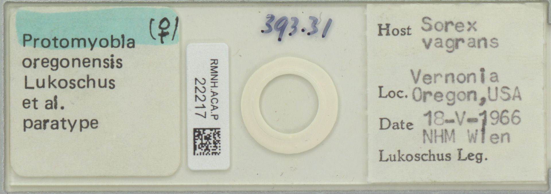 RMNH.ACA.P.22217 | Protomyobia oregonensis