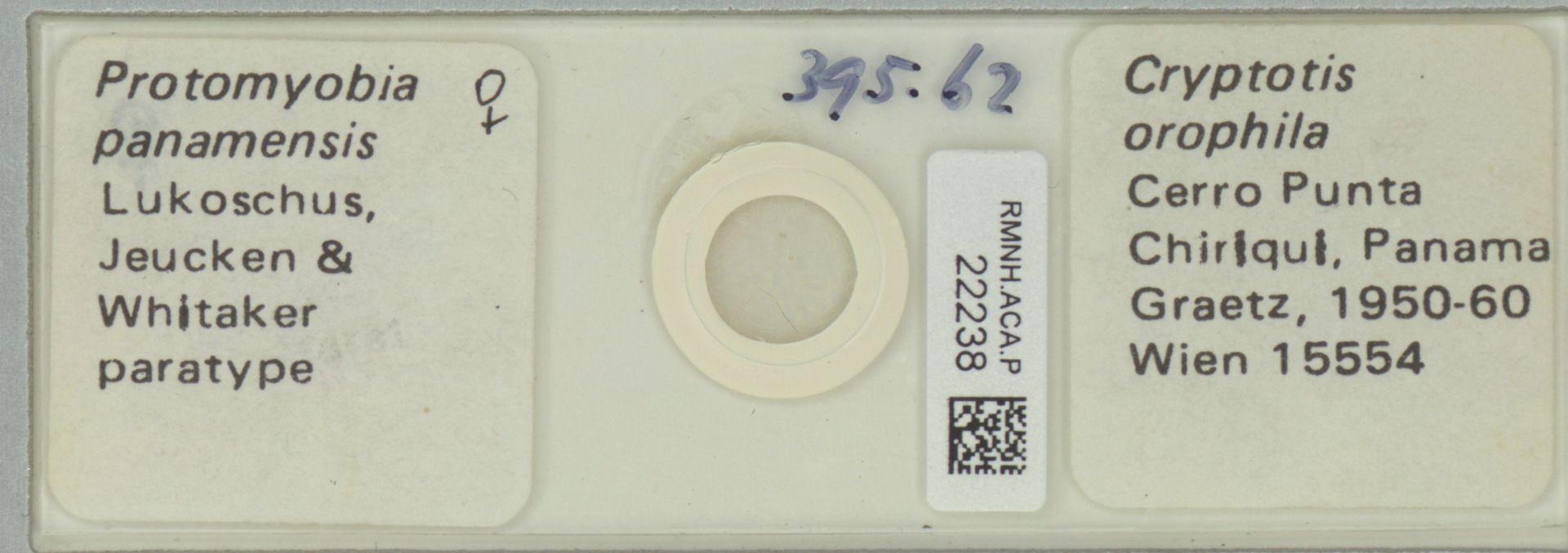 RMNH.ACA.P.22238 | Protomyobia panamensis Lukoschus, Jeucken & Whitaker