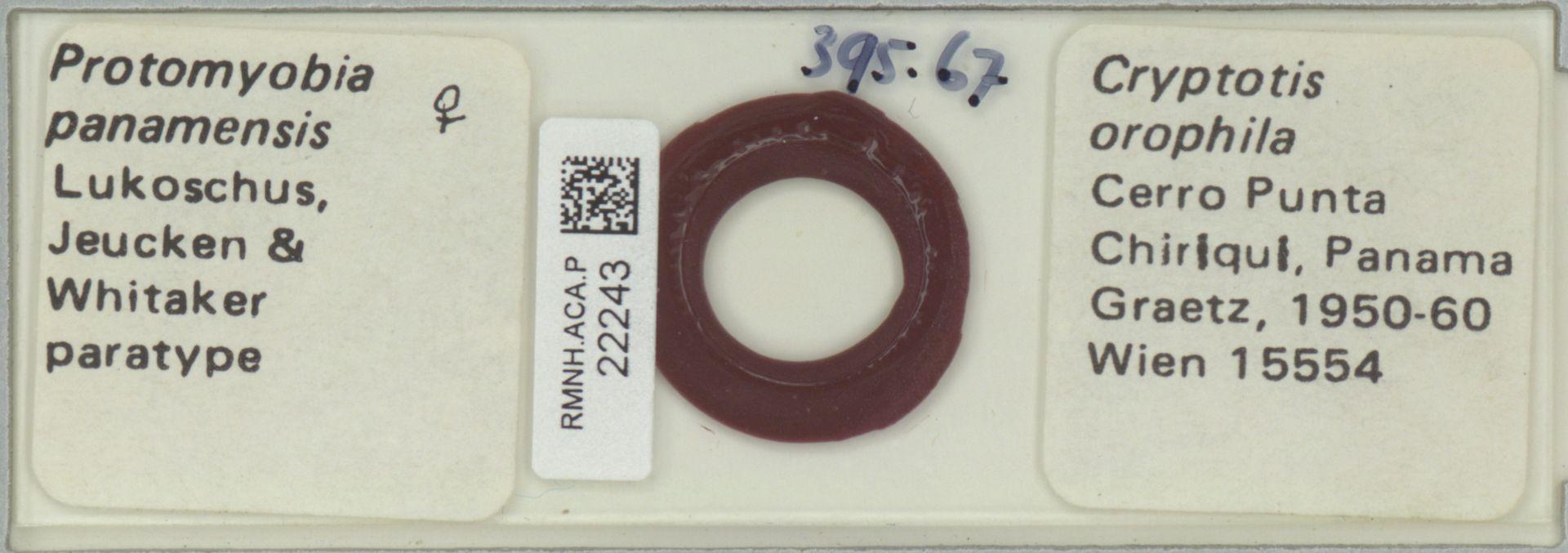 RMNH.ACA.P.22243 | Protomyobia panamensis Lukoschus, Jeucken & Whitaker
