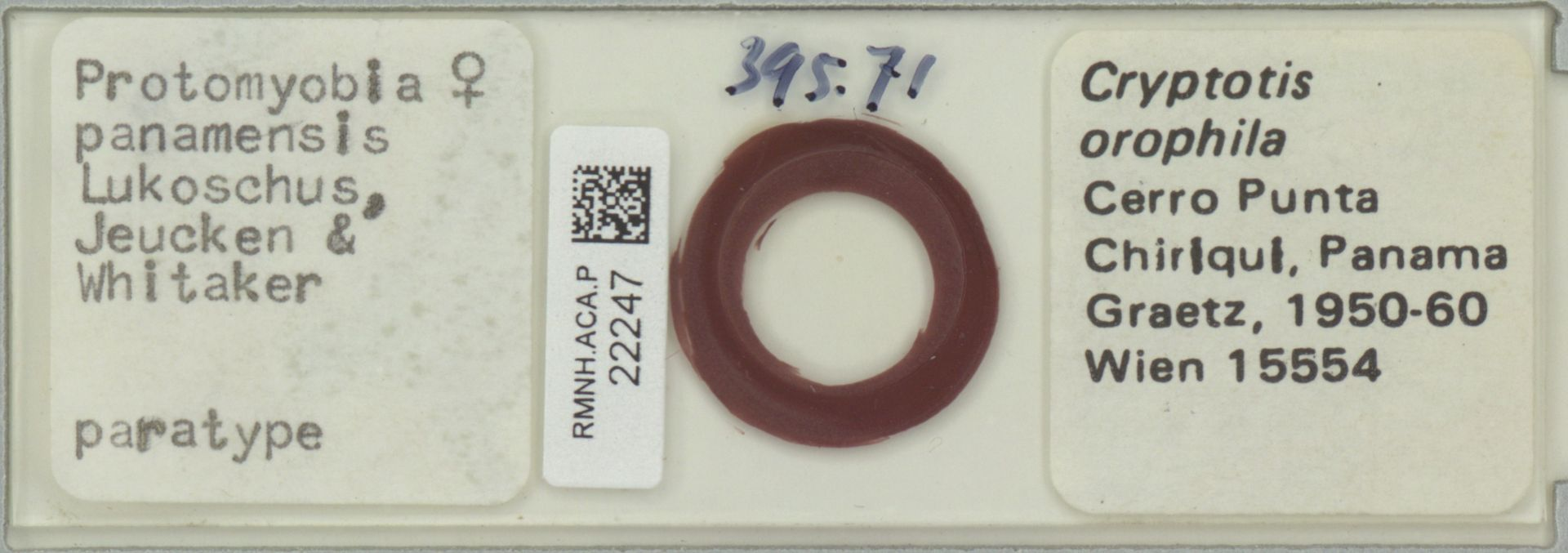 RMNH.ACA.P.22247 | Protomyobia panamensis Lukoschus, Jeucken & Whitaker