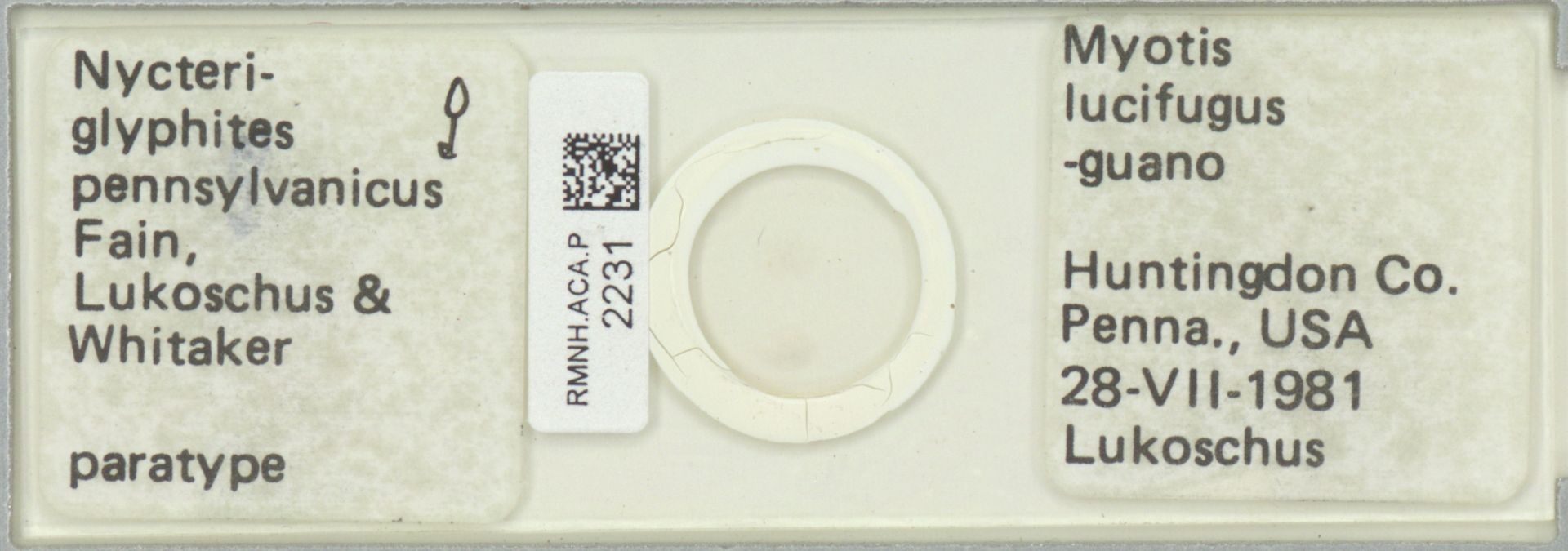 RMNH.ACA.P.2231   Nycteroglyphites pennsylvanicus Fain, Lukoschus & Whitaker