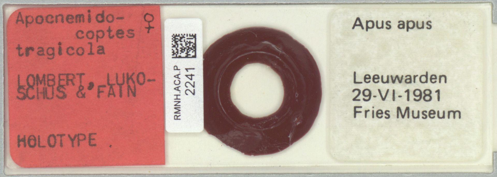 RMNH.ACA.P.2241 | Apocnemidocoptes tragicola Lombert, Lukoschus & Fain