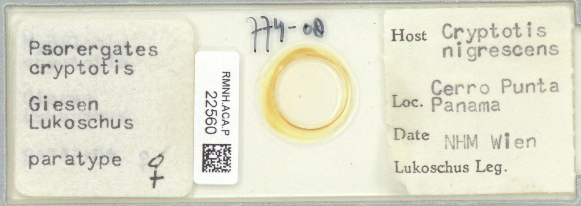 RMNH.ACA.P.22560 | Psorergates cryptotis Giesen Lukoschus