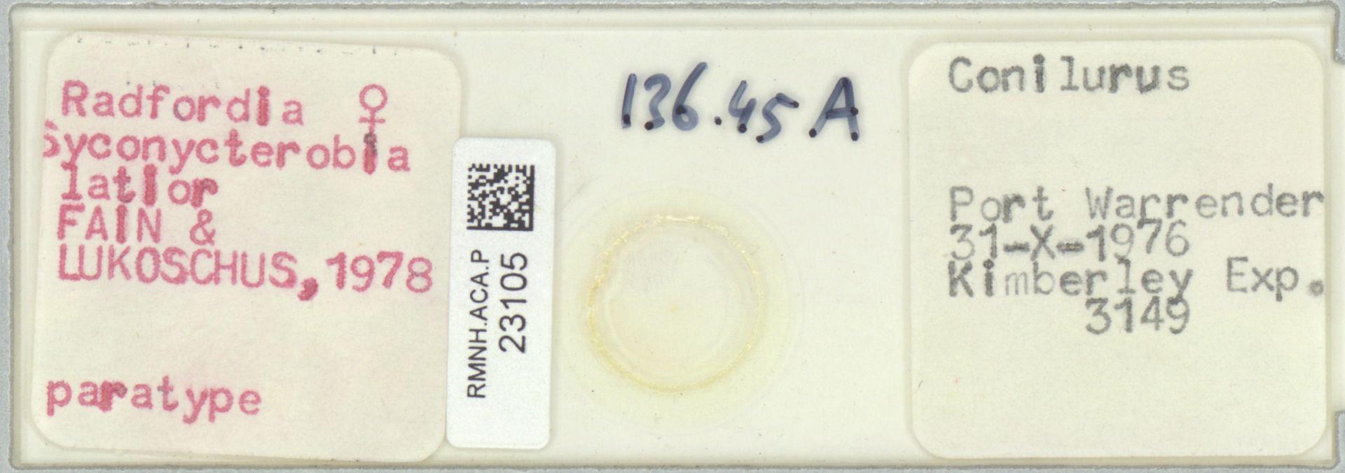 RMNH.ACA.P.23105 | Radfordia (Syconycterobia) latior Fain & Lukoschus 1978