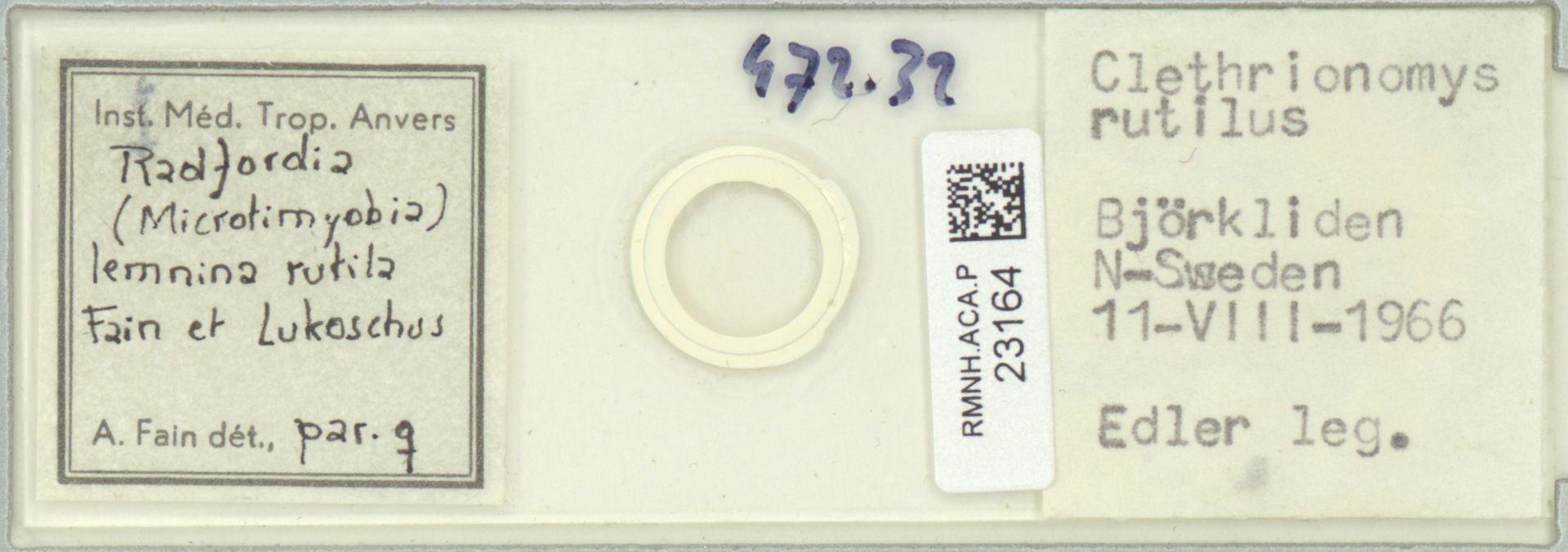 RMNH.ACA.P.23164 | Radfordia (Microtimyobia) lemnina rutila Fain et Lukoschus