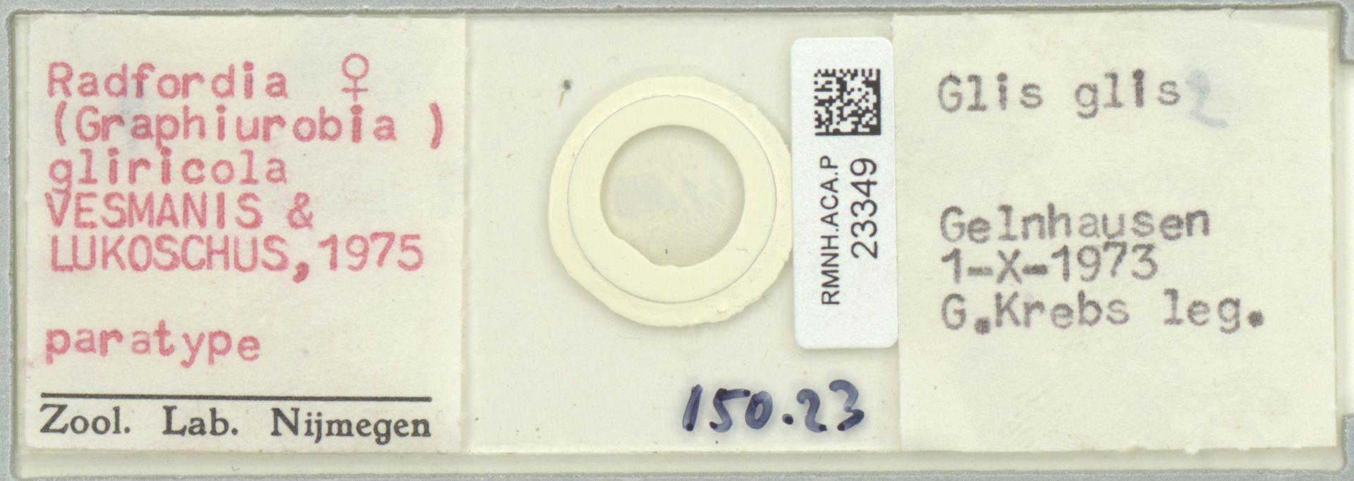 RMNH.ACA.P.23349 | Radfordia (Graphiurobia) gliricola VESMANIS & LUKOSCHUS, 1975