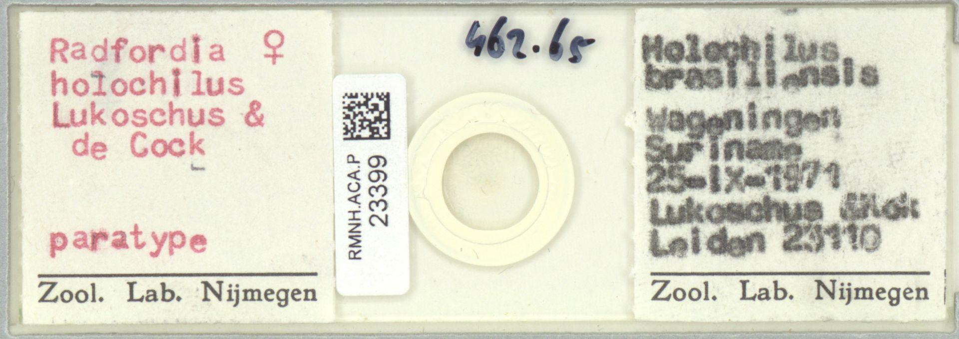 RMNH.ACA.P.23399 | Radfordia holochilus Lukoschus & de Cock