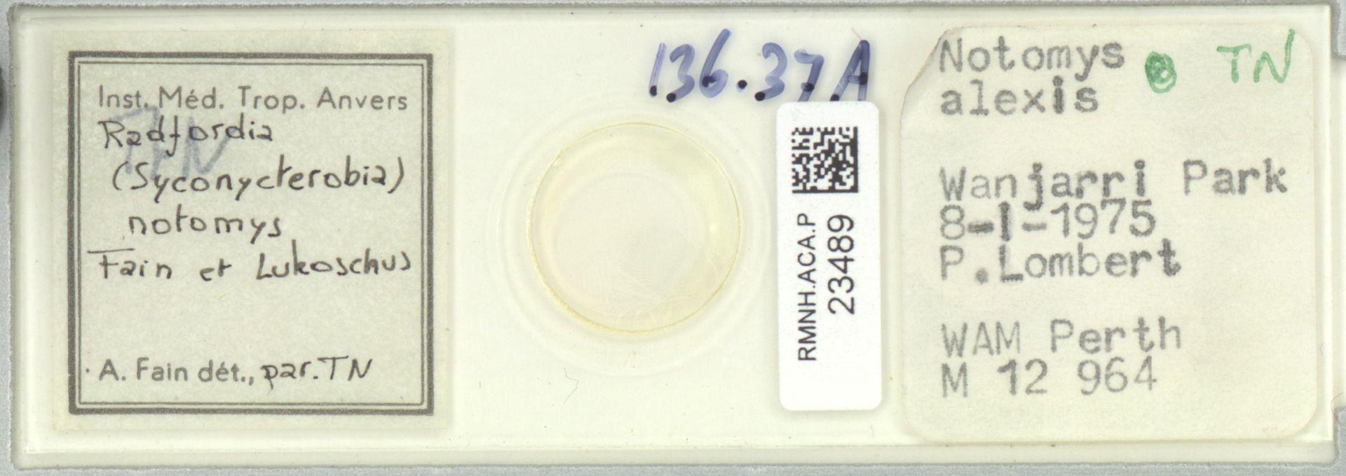 RMNH.ACA.P.23489 | Radfordia (Syconycterobia) notomys Fain et Lukoschus