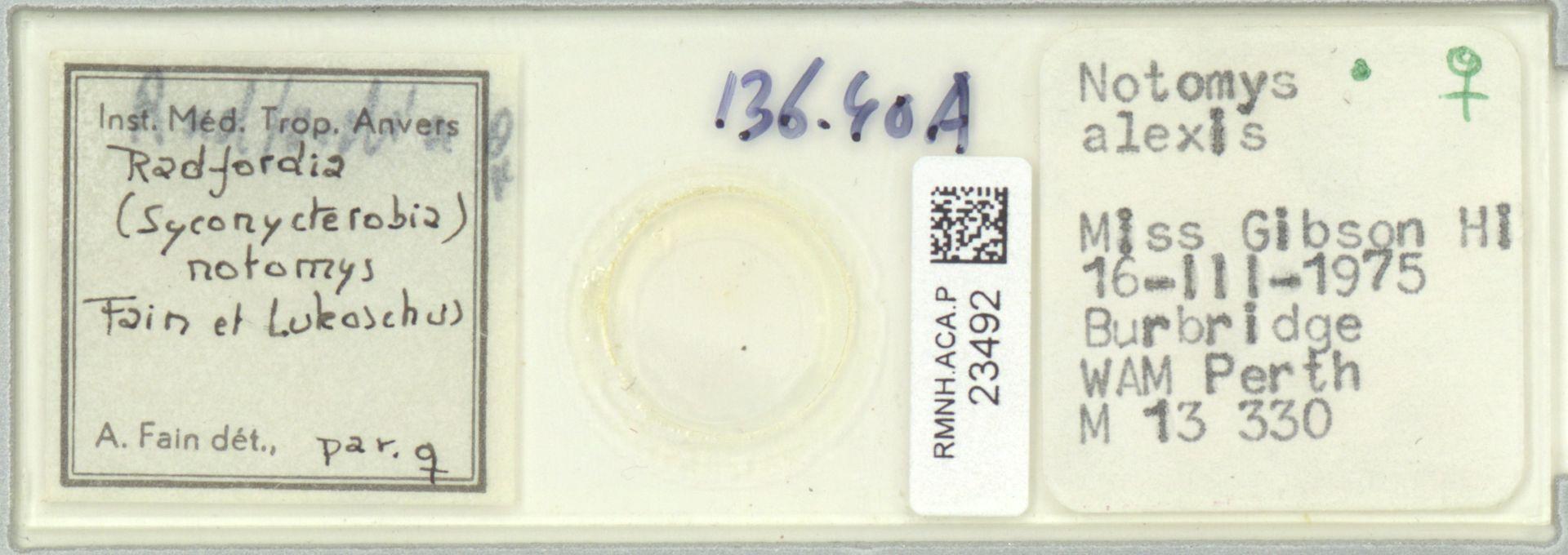 RMNH.ACA.P.23492 | Radfordia (Syconycterobia) notomys Fain, Lukoschus