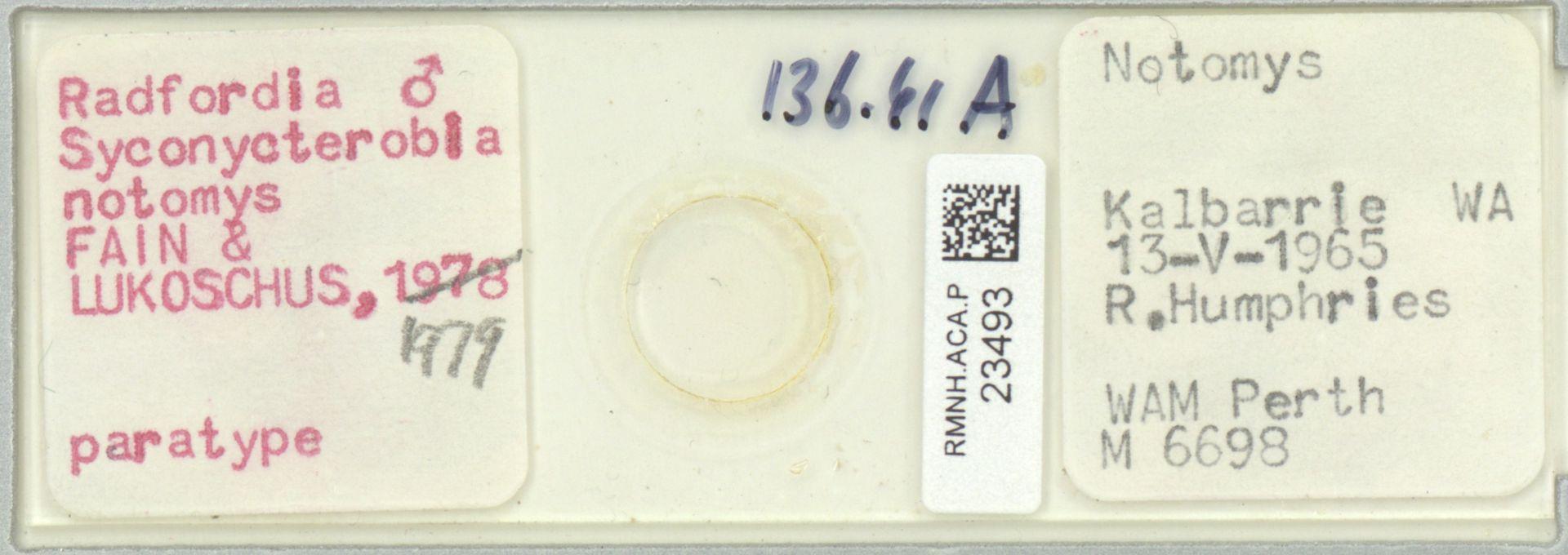 RMNH.ACA.P.23493 | Radfordia (Syconycterobia) notomys Fain & Lukoschus, 1979