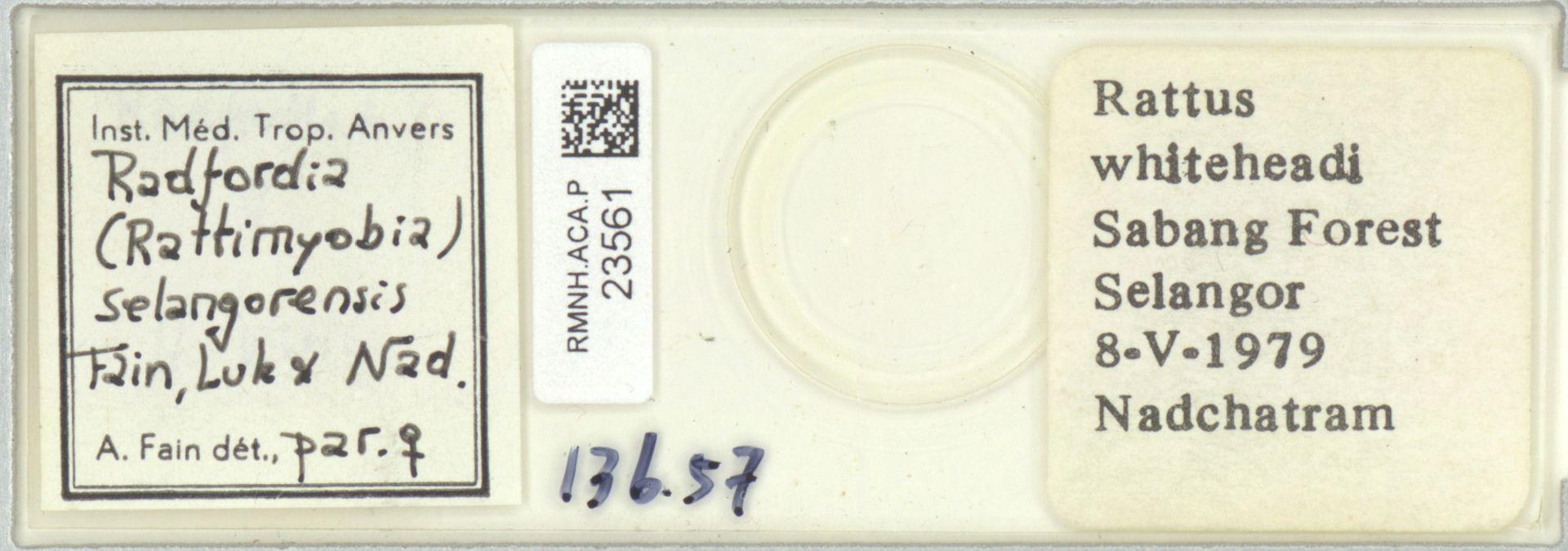 RMNH.ACA.P.23561 | Radfordia (Rattimyobia) selangorensis Fain, Luk & Nad