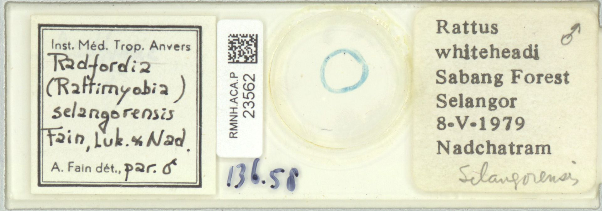 RMNH.ACA.P.23562 | Radfordia (Rattimyobia) selangorensis Fain, Luk & Nad.