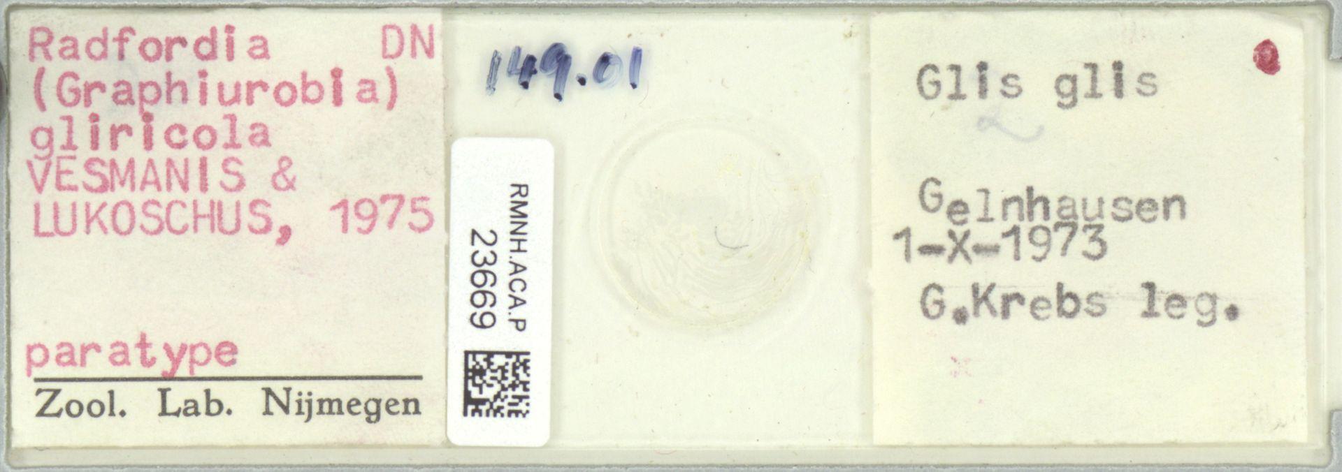 RMNH.ACA.P.23669 | Radfordia (Graphiurobia) gliricola VESMANIS & LUKOSCHUS, 1975