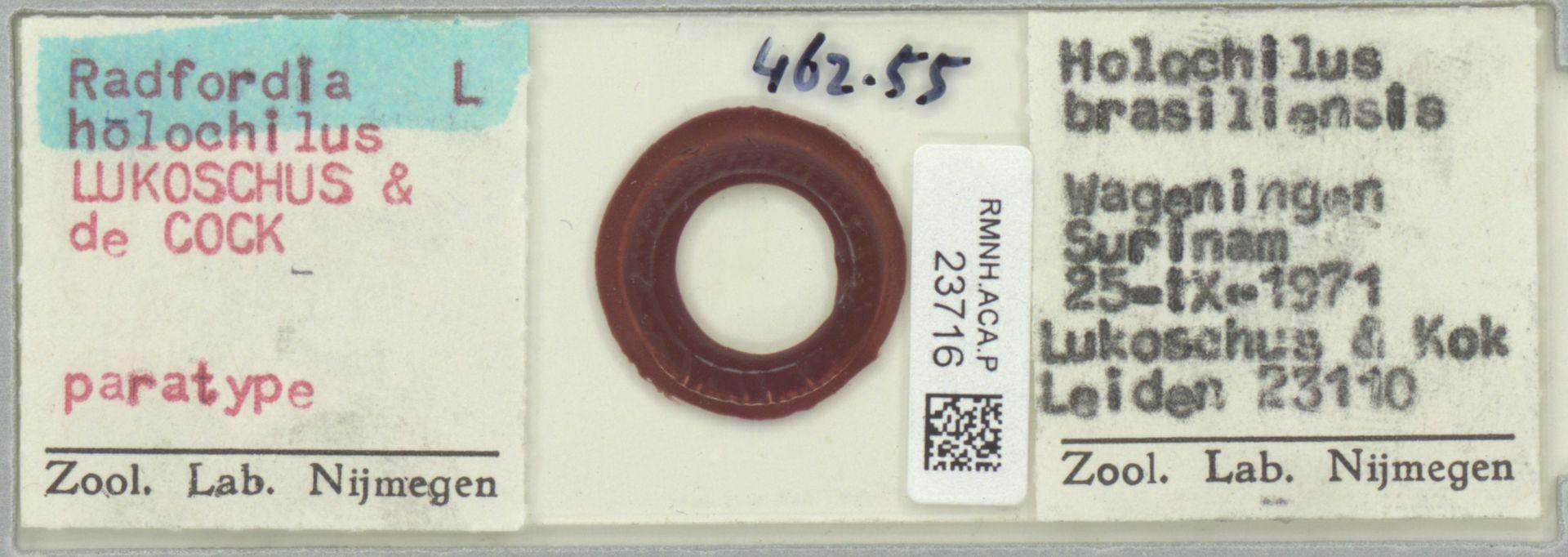RMNH.ACA.P.23716 | Radfordia holochilus Lukoschus & de Cock