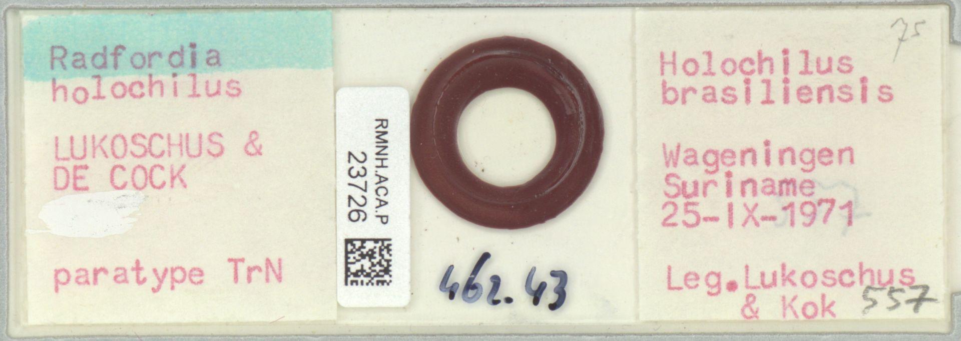 RMNH.ACA.P.23726 | Radfordia holochilus Lukoschus & De Cock