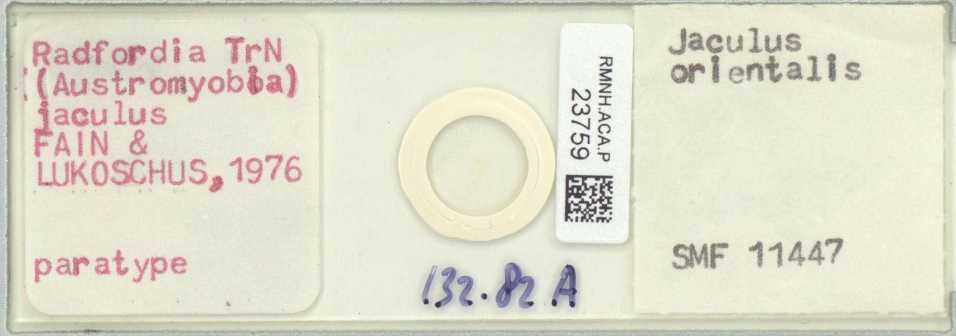 RMNH.ACA.P.23759 | Radfordia (Austromyobia) jaculus Fain, Lukoschus 1976