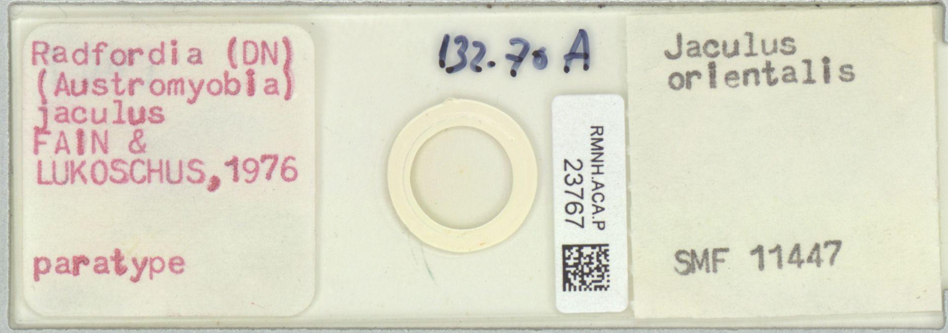 RMNH.ACA.P.23767 | Radfordia (Austromyobia) jaculus Fain, Lukoschus 1976
