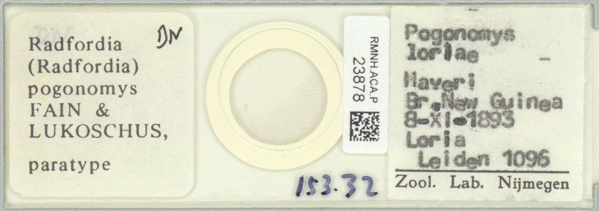 RMNH.ACA.P.23878   Radfordia (Radfordia) pogonomys Fain & Lukoschus