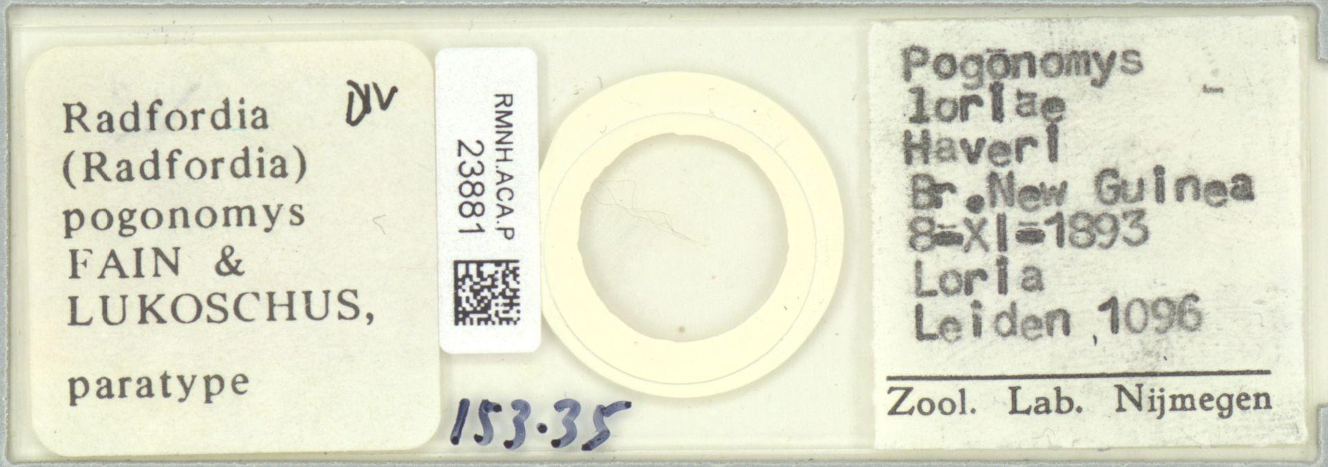 RMNH.ACA.P.23881 | Radfordia (Radfordia) pogonomys Fain & Lukoschus