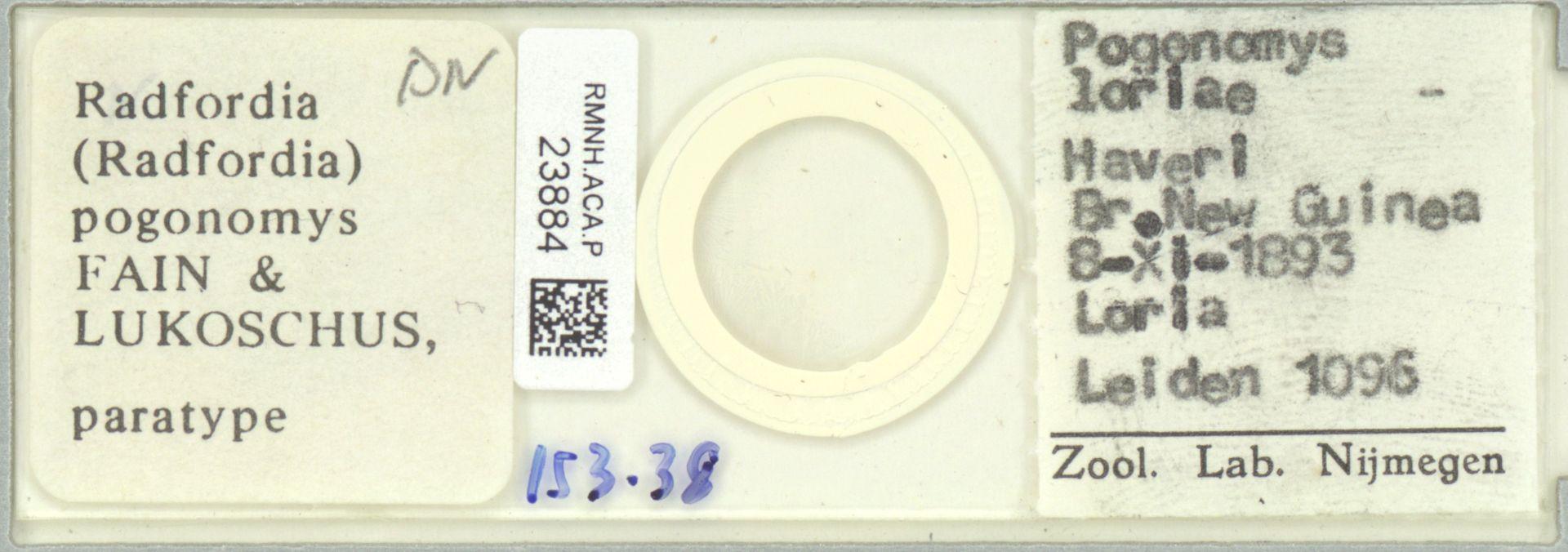 RMNH.ACA.P.23884 | Radfordia (Radfordia) pogonomys Fain & Lukoschus