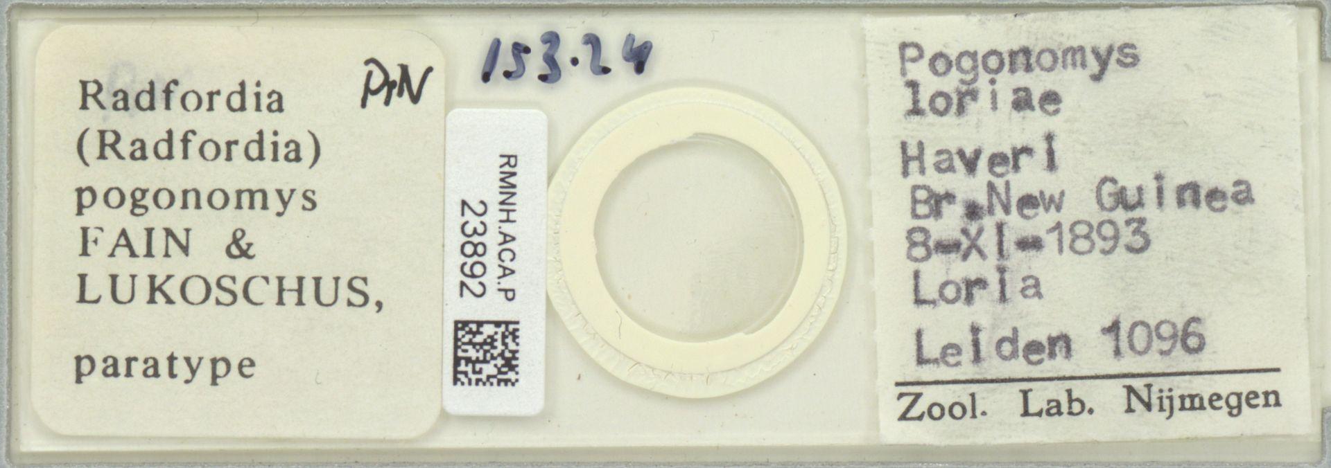 RMNH.ACA.P.23892 | Radfordia (Radfordia) pogonomys Fain & Lukoschus