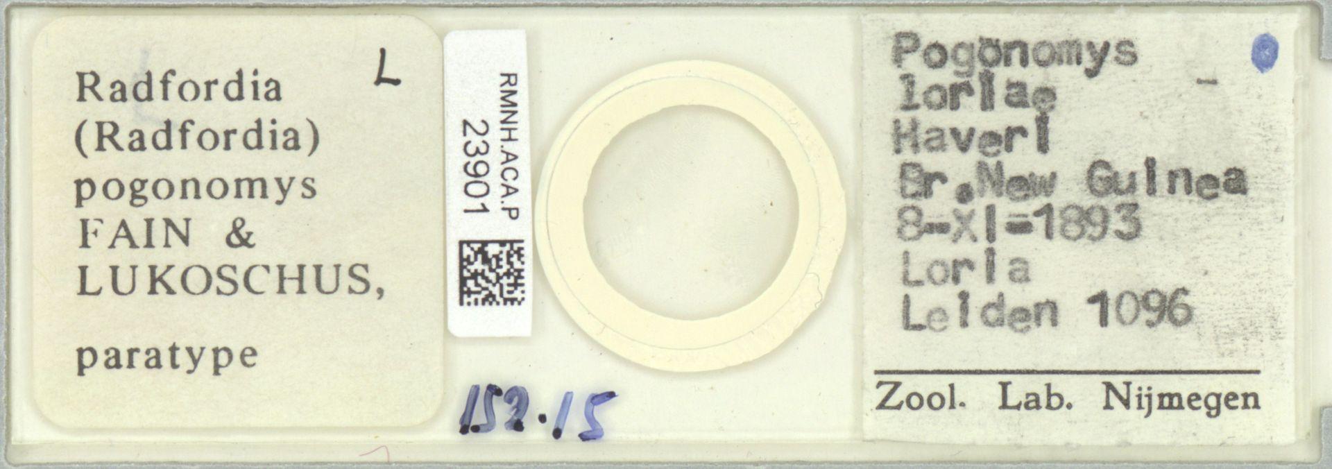 RMNH.ACA.P.23901 | Radfordia (Radfordia) pogonomys Fain & Lukoschus