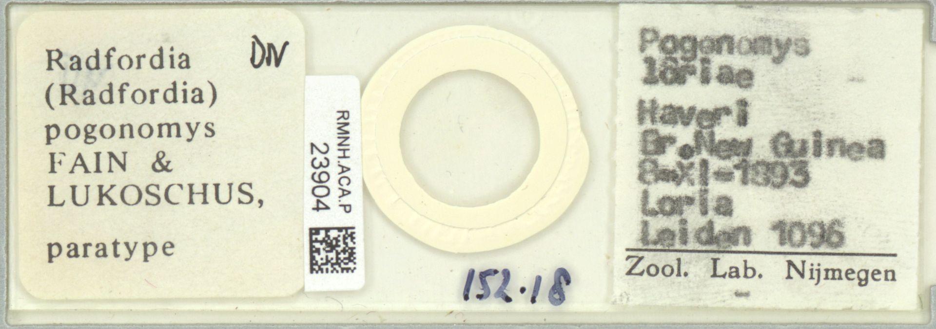 RMNH.ACA.P.23904 | Radfordia (Radfordia) pogonomys Fain & Lukoschus