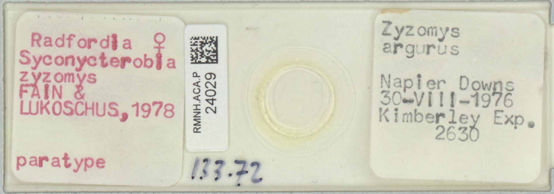 RMNH.ACA.P.24029   Radfordia (Syconycterobia) zyzomys Fain & Lukoschus, 1978