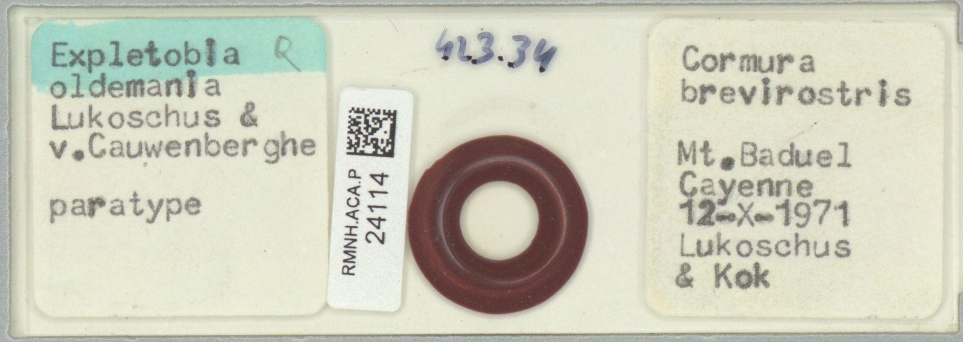 RMNH.ACA.P.24114 | Expletobia oldemania Lukoschus & v.Cauwenberghe